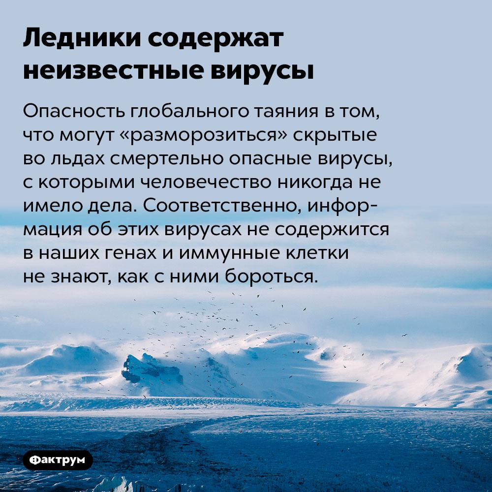 Ледники содержат неизвестные вирусы. Опасность глобального таяния в том, что могут «разморозиться» скрытые во льдах смертельно опасные вирусы, с которыми человечество никогда не имело дела. Соответственно, информация об этих вирусах не содержится в наших генах и иммунные клетки не знают, как с ними бороться.