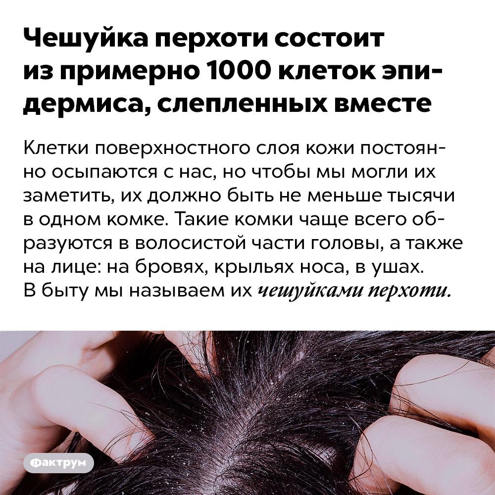 Чешуйка перхоти состоит из примерно 1000 клеток эпидермиса, слепленных вместе. Клетки поверхностного слоя кожи постоянно осыпаются с нас, но чтобы мы могли их заметить, их должно быть не меньше тысячи в одном комке. Такие комки чаще всего образуются в волосистой части головы, а также на лице: на бровях, крыльях носа, в ушах. В быту мы называем их чешуйками перхоти.