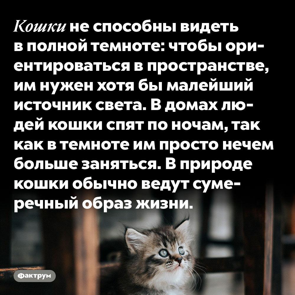 Кошки не способны видеть в полной темноте. Чтобы ориентироваться в пространстве, им нужен хотя бы малейший источник света. В домах людей кошки спят по ночам, так как в темноте им просто нечем больше заняться. В природе кошки обычно ведут сумеречный образ жизни.