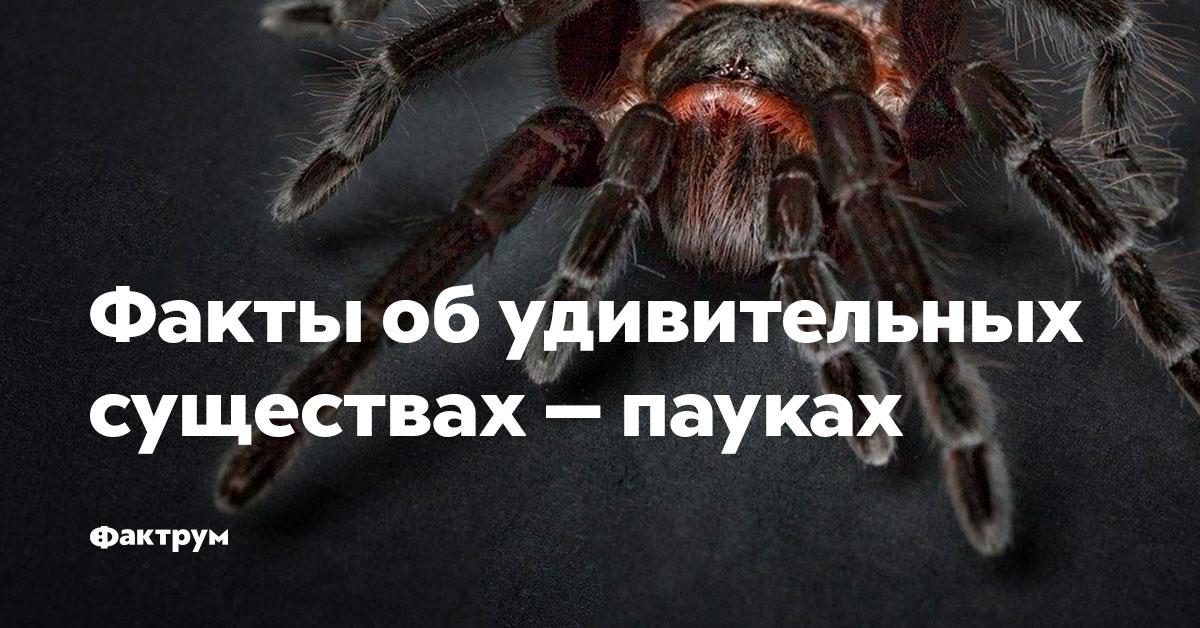 Факты обудивительных существах —пауках