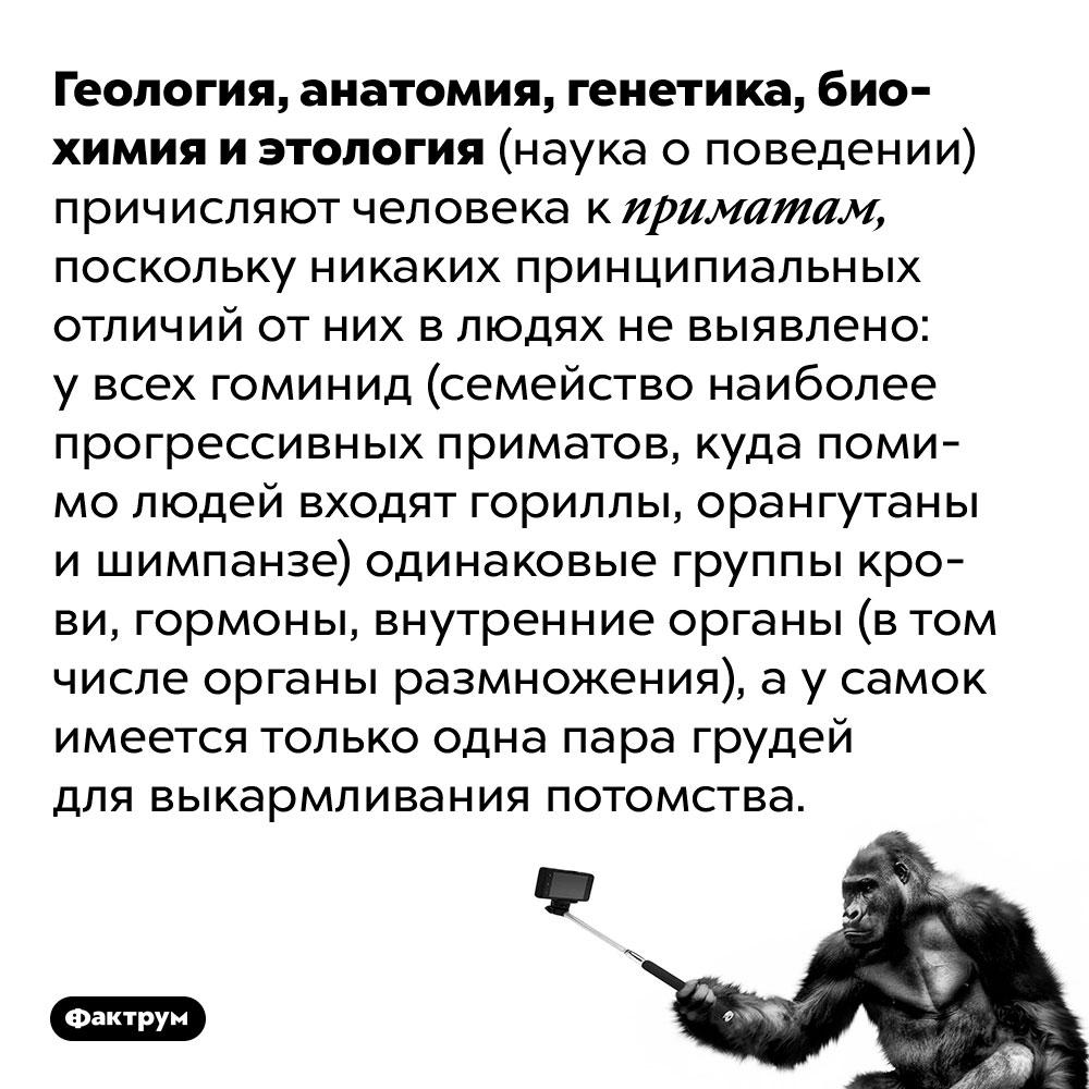 Геология, анатомия, генетика, биохимия и этология (наука о поведении) причисляют человека к приматам, поскольку никаких принципиальных отличий от них в людях не выявлено. У всех гоминид (семейство наиболее прогрессивных приматов, куда помимо людей входят гориллы, орангутаны и шимпанзе) одинаковые группы крови, гормоны, внутренние органы (в том числе органы размножения), а у самок имеется только одна пара грудей для выкармливания потомства.
