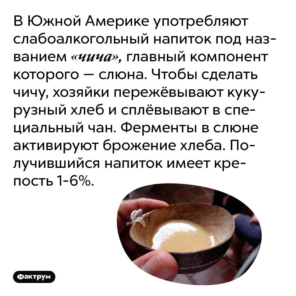 В Южной Америке употребляют слабоалкогольный напиток под названием «чича», главный компонент которого — слюна. Чтобы сделать чичу, хозяйки пережёвывают кукурузный хлеб и сплёвывают в специальный чан. Ферменты в слюне активируют брожение хлеба. Получившийся напиток имеет крепость 1-6%.