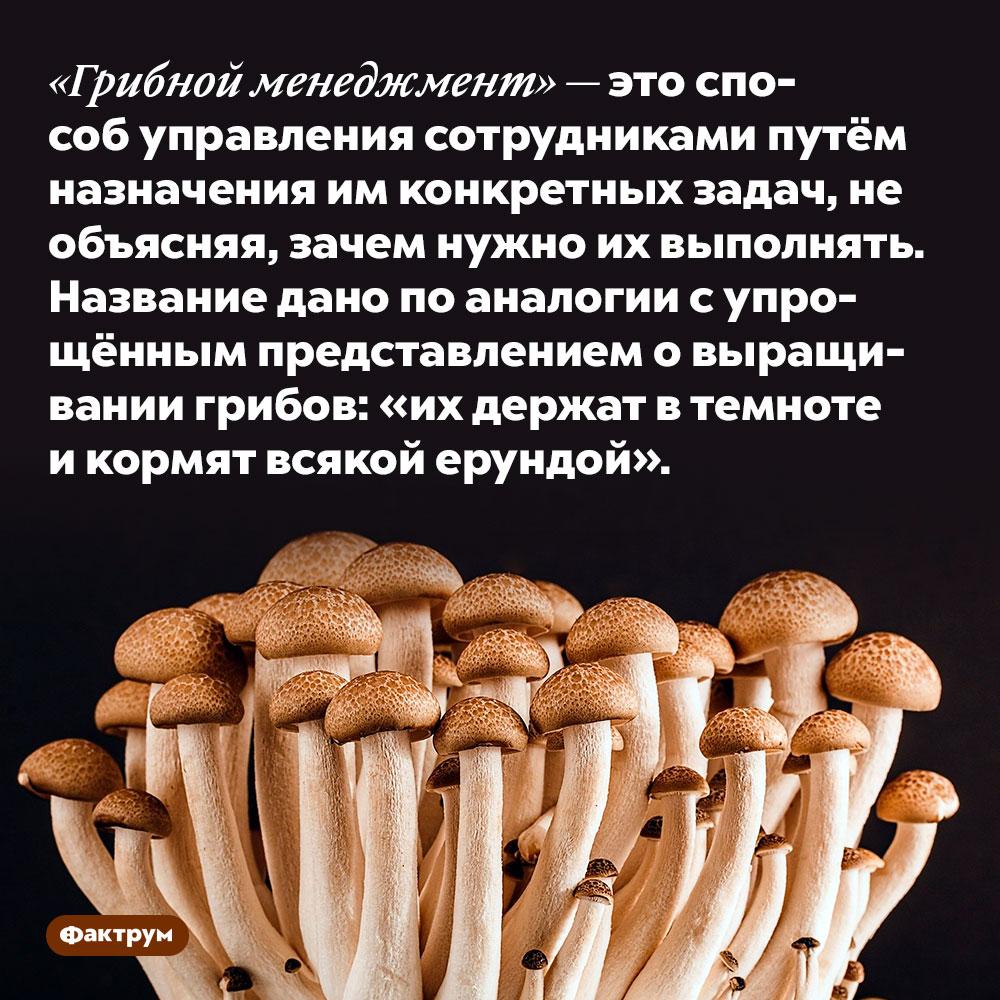 «Грибной менеджмент» — это способ управления сотрудниками путём назначения им конкретных задач, необъясняя, зачем нужно их выполнять.  Название дано по аналогии с упрощённым представлением о выращивании грибов: «их держат в темноте и кормят всякой ерундой».
