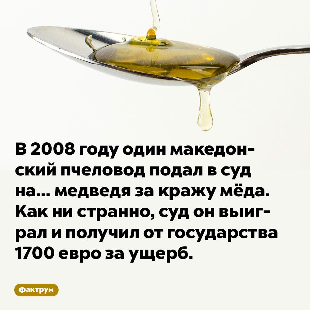 В 2008 году один македонский пчеловод подал в суд на… медведя за кражу мёда. Как ни странно, суд он выиграл и получил от государства 1700 евро за ущерб.