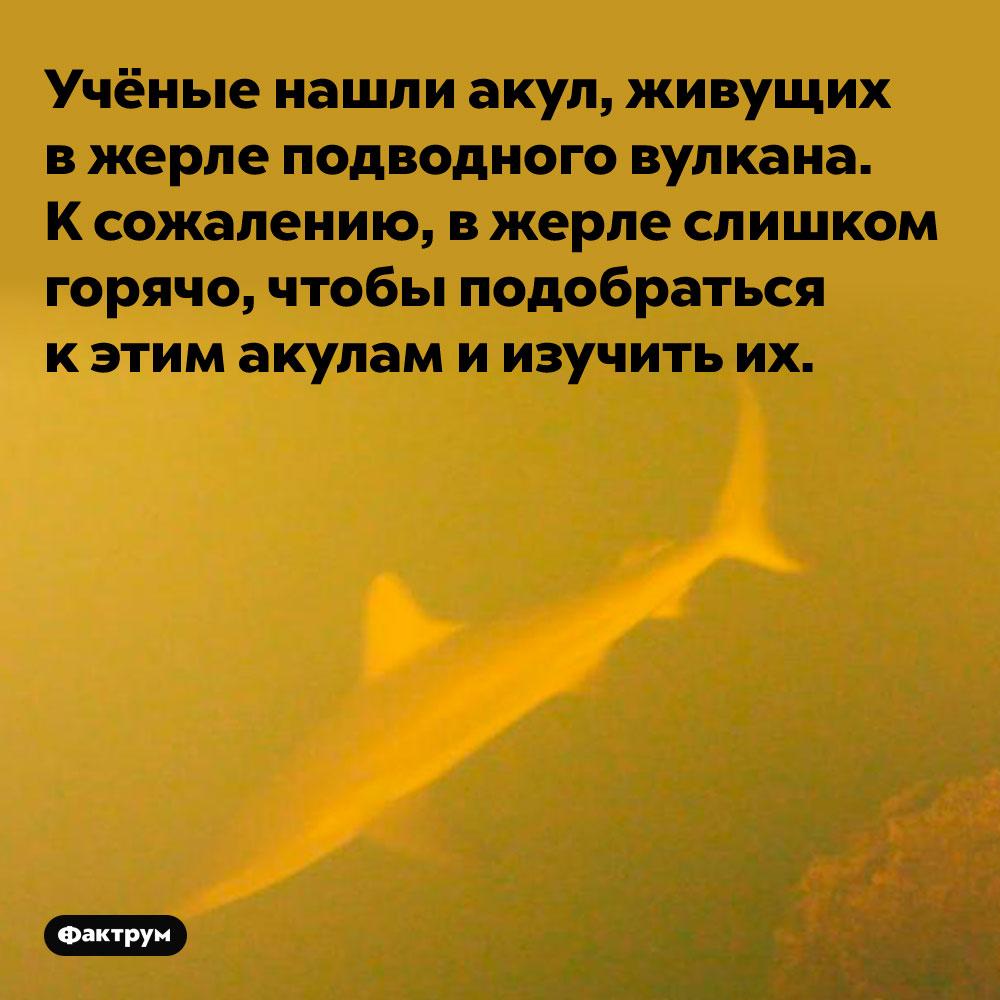 Учёные нашли акул, живущих вжерле подводного вулкана.