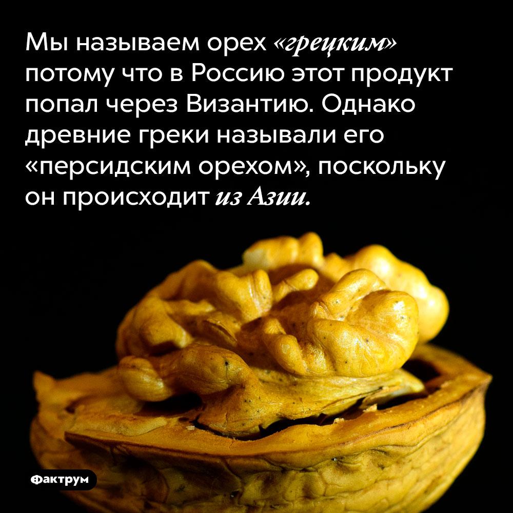 Мы называем орех «грецким» потому что в Россию этот продукт попал через Византию. Однако древние греки называли его «персидским орехом», поскольку он происходит из Азии.