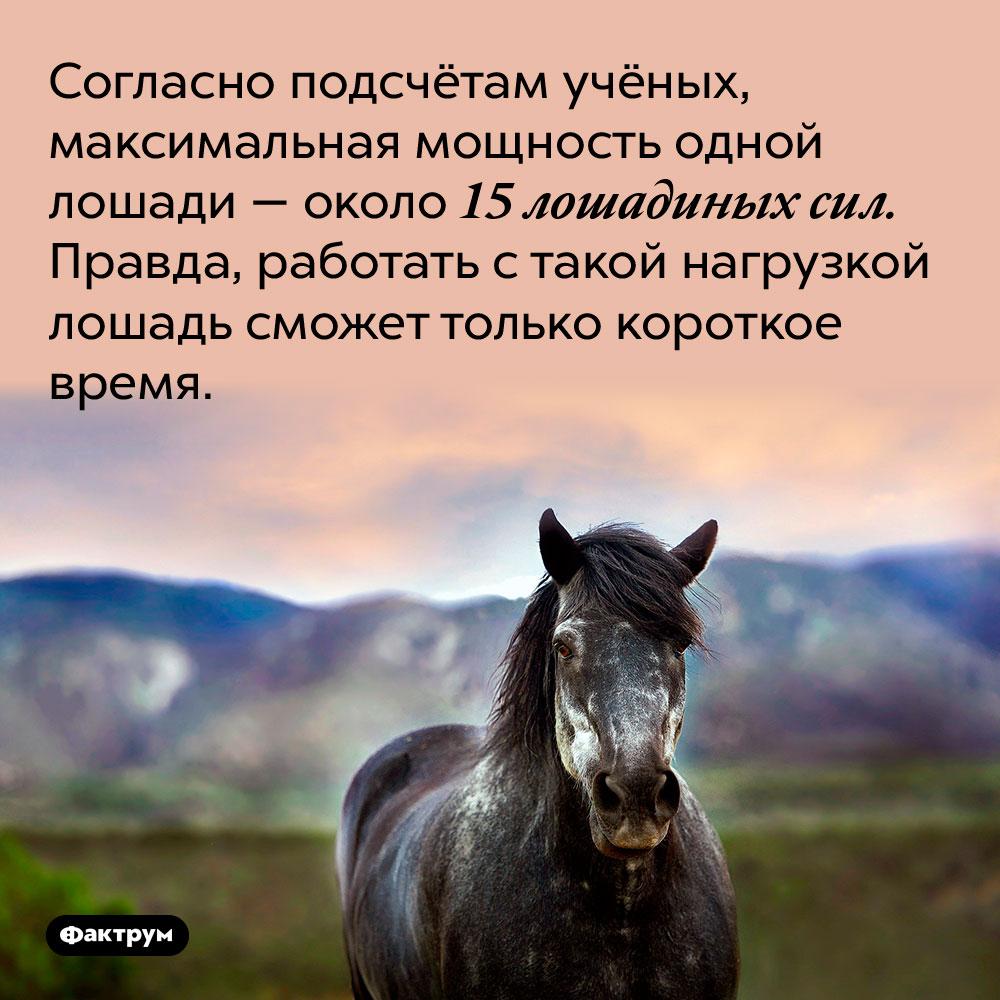 Согласно подсчётам учёных, максимальная мощность одной лошади — около 15 лошадиных сил. Правда, работать с такой нагрузкой лошадь сможет только короткое время.