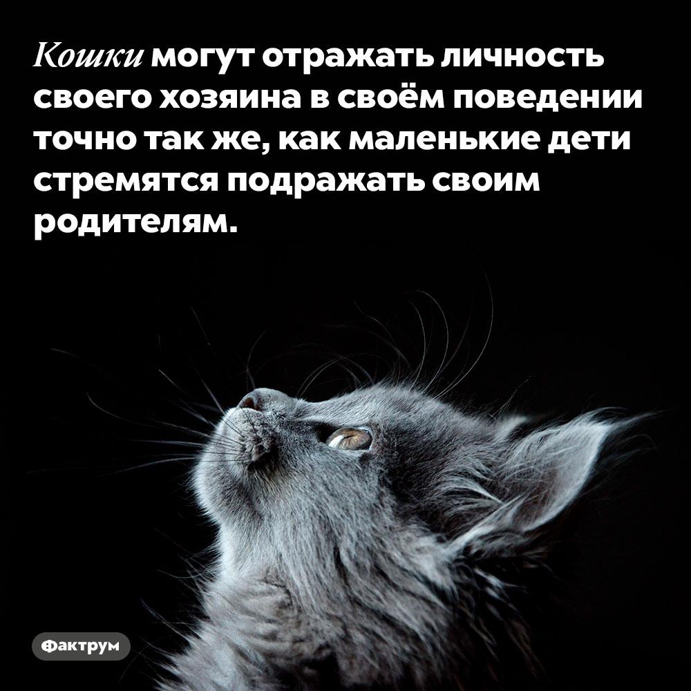 Кошки могут отражать личность своего хозяина в своём поведении. Точно так же, как маленькие дети стремятся подражать своим родителям.