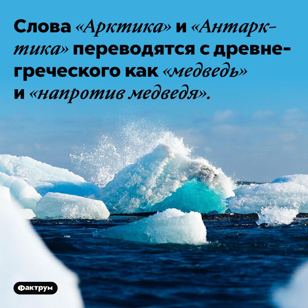 Слова «Арктика» и «Антарктика» переводятся с древнегреческого как «медведь» и «напротив медведя».