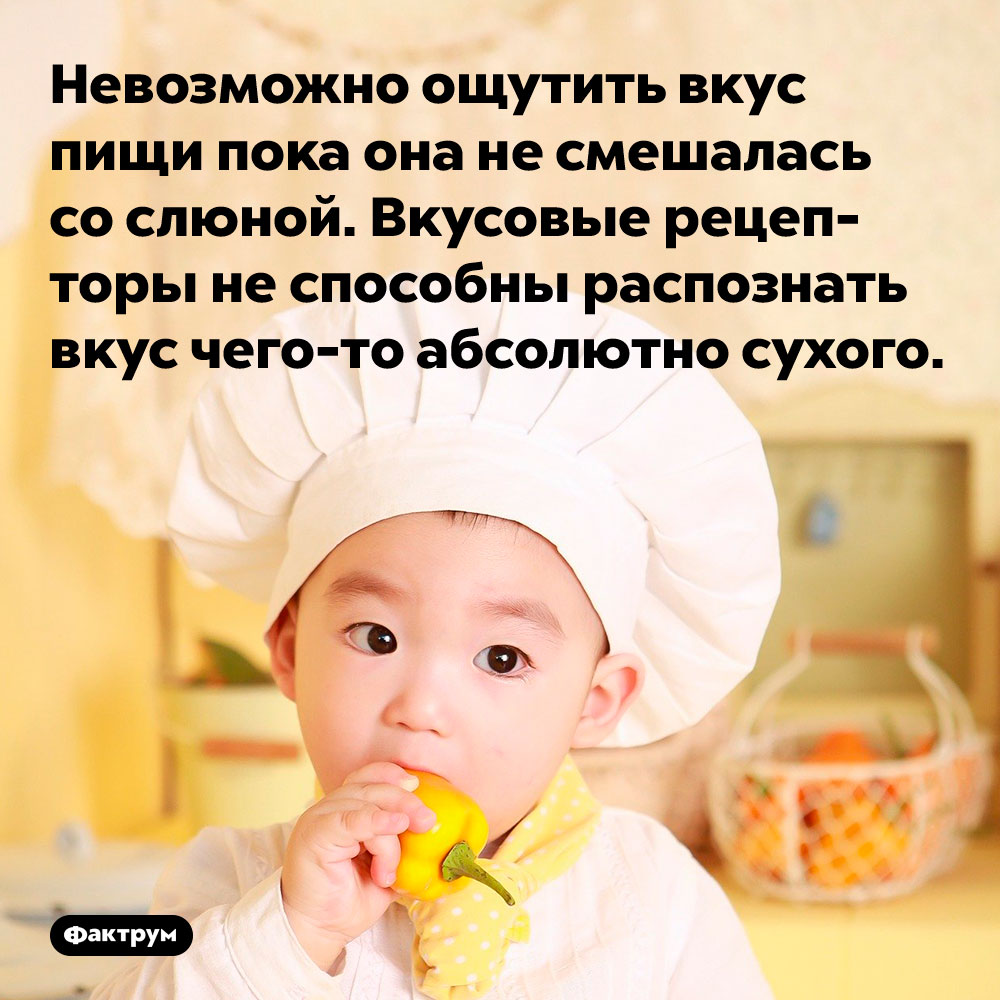 Невозможно ощутить вкус пищи пока она не смешалась со слюной. Вкусовые рецепторы не способны распознать вкус чего-то абсолютно сухого.