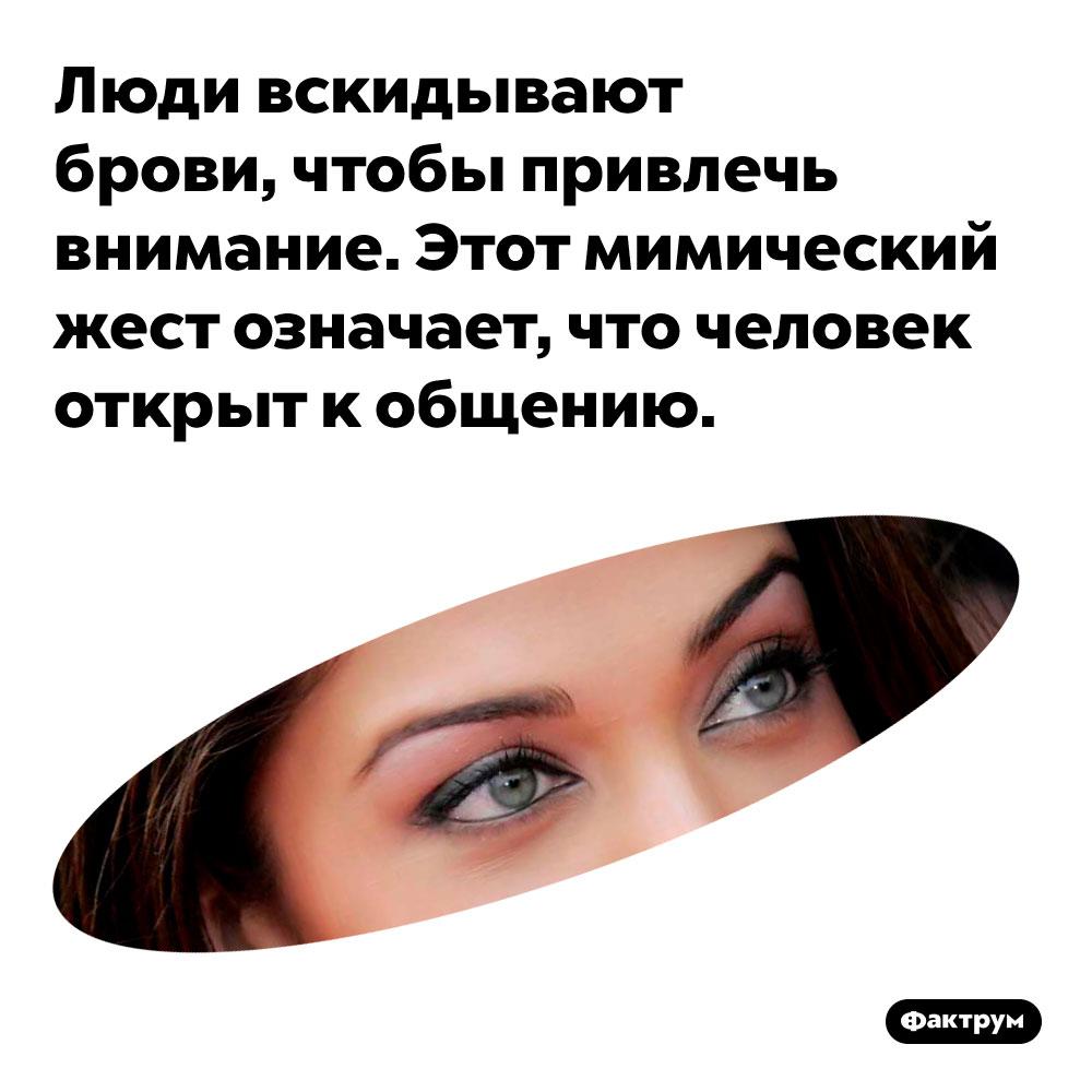 Люди вскидывают брови, чтобы привлечь внимание. Этот мимический жест означает, что человек открыт к общению.