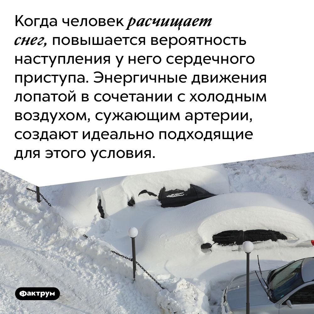 Когда человек расчищает снег, повышается вероятность наступления у него сердечного приступа. Энергичные движения лопатой в сочетании с холодным воздухом, сужающим артерии, создают идеально подходящие для этого условия.