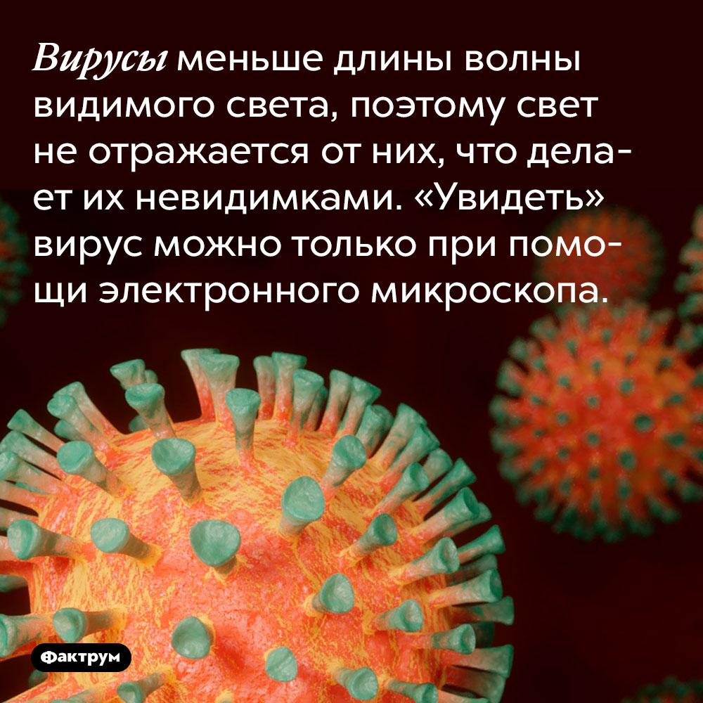 Вирусы меньше длины волны видимого света, поэтому свет не отражается от них, что делает их невидимками. «Увидеть» вирус можно только при помощи электронного микроскопа.