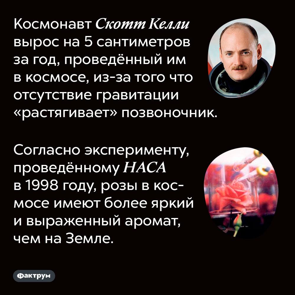 Космонавт Скотт Келли вырос на 5 сантиметров за год, проведённый им в космосе, из-за того что отсутствие гравитации «растягивает» позвоночник. Согласно эксперименту, проведённому НАСА в 1998 году, розы в космосе имеют более яркий и выраженный аромат, чем на Земле.