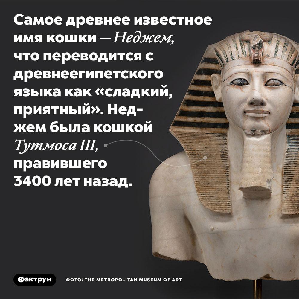 Самое древнее известное имя кошки — Неджем, что переводится с древнеегипетского языка как «сладкий, приятный». Неджем была кошкой Тутмоса III, правившего 3400 лет назад.