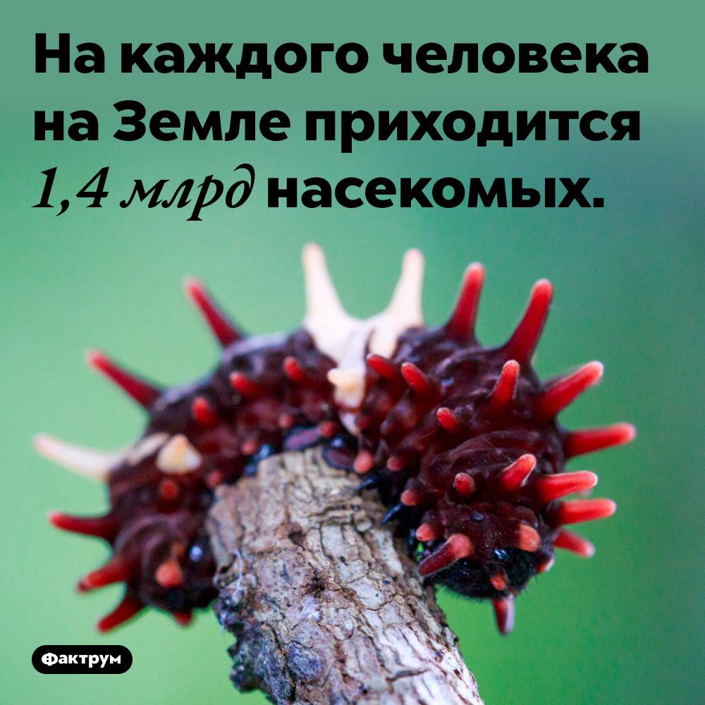 На каждого человека на Земле приходится 1,4 млрд насекомых.