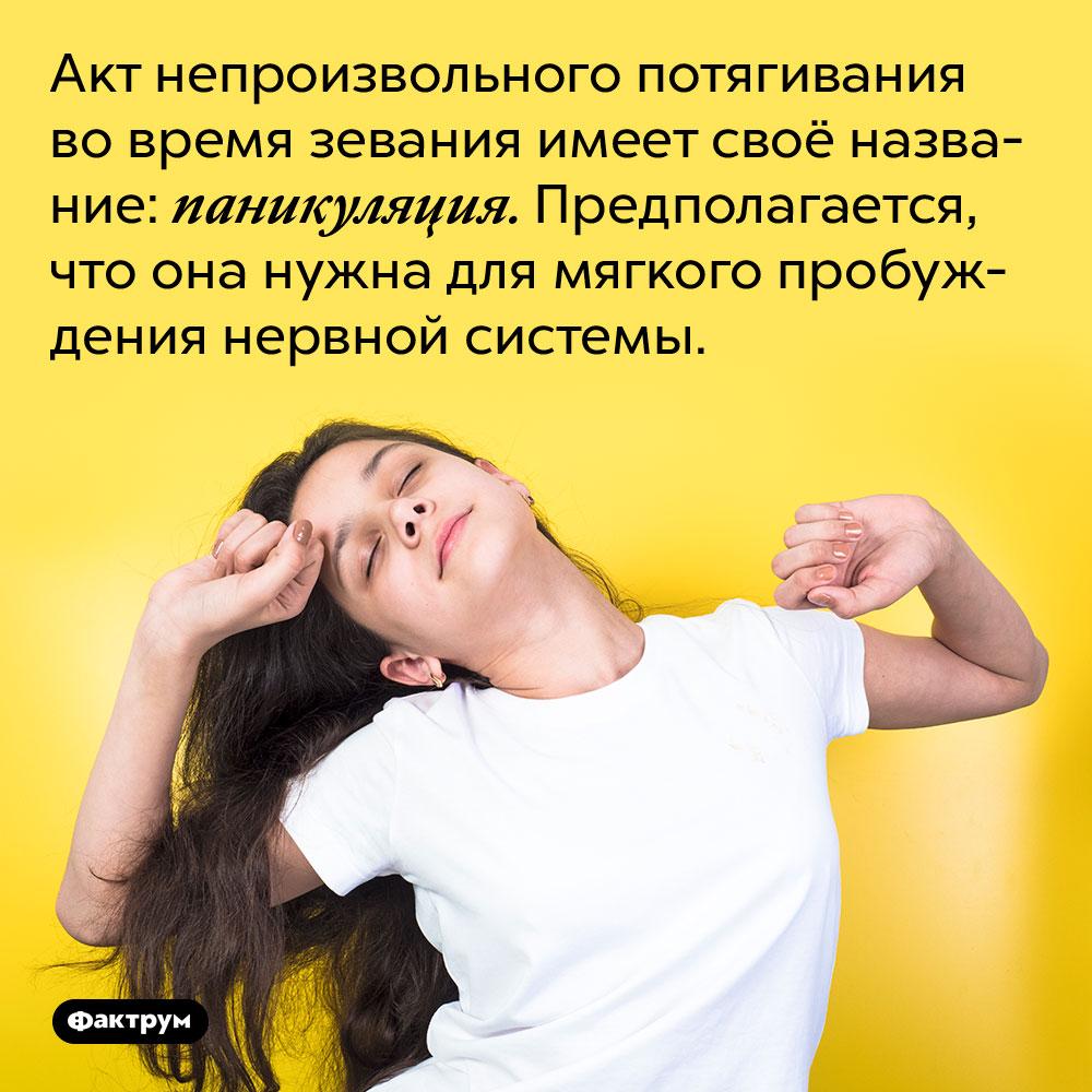 Акт непроизвольного потягивания во время зевания имеет своё название: паникуляция. Предполагается, что она нужна для мягкого пробуждения нервной системы.