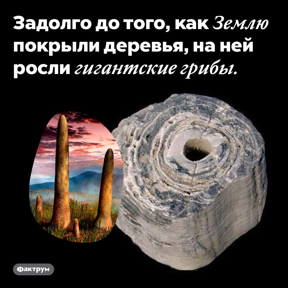 Задолго до того, как Землю покрыли деревья, на ней росли гигантские грибы.