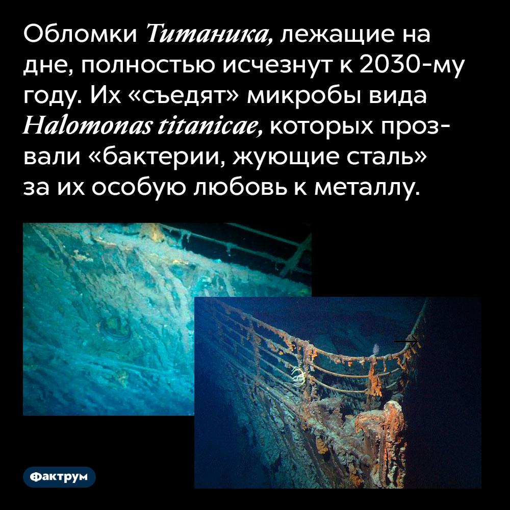 Обломки Титаника, лежащие на дне, полностью исчезнут к 2030-му году. Их «съедят» микробы вида Halomonas titanicae, которых прозвали «бактерии, жующие сталь» за их особую любовь к металлу.