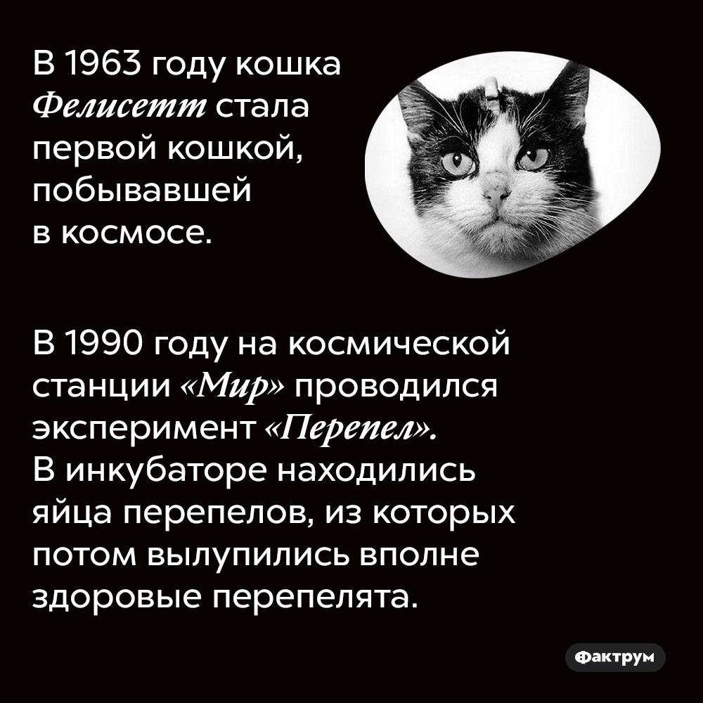 В 1963 году кошка Фелисетт стала первой кошкой, побывавшей в космосе. В 1990 году на космической станции «Мир» проводился эксперимент «Перепел». В инкубаторе находились яйца перепелов, из которых потом вылупились вполне здоровые перепелята.