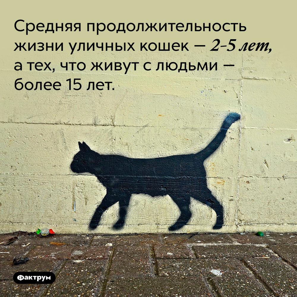 Средняя продолжительность жизни уличных кошек — 2-5 лет, а тех, что живут с людьми — более 15 лет.