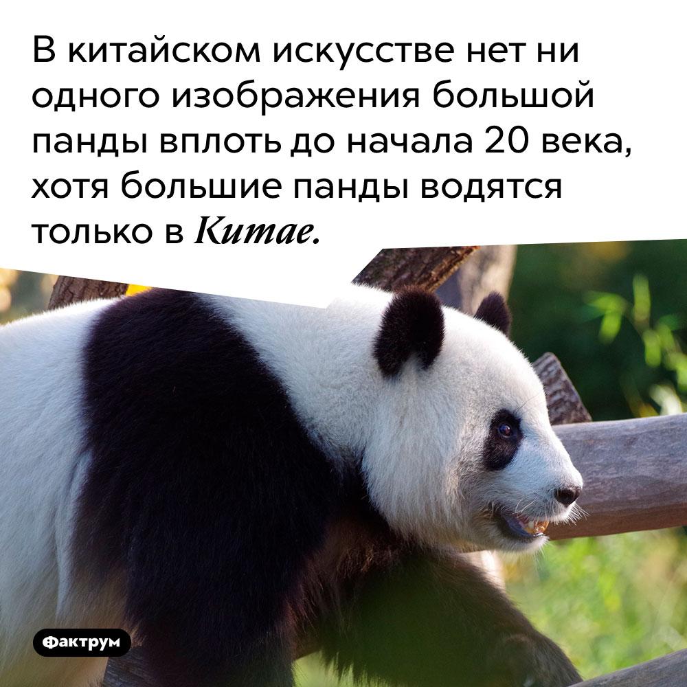В китайском искусстве нет ни одного изображения большой панды вплоть до начала 20 века, хотя большие панды водятся только в Китае.