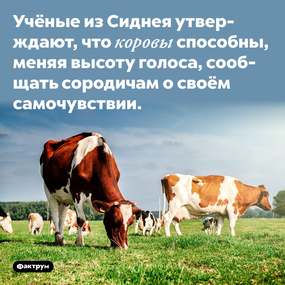 Учёные из Сиднея утверждают, что коровы способны, меняя высоту голоса, сообщать сородичам о своём самочувствии.