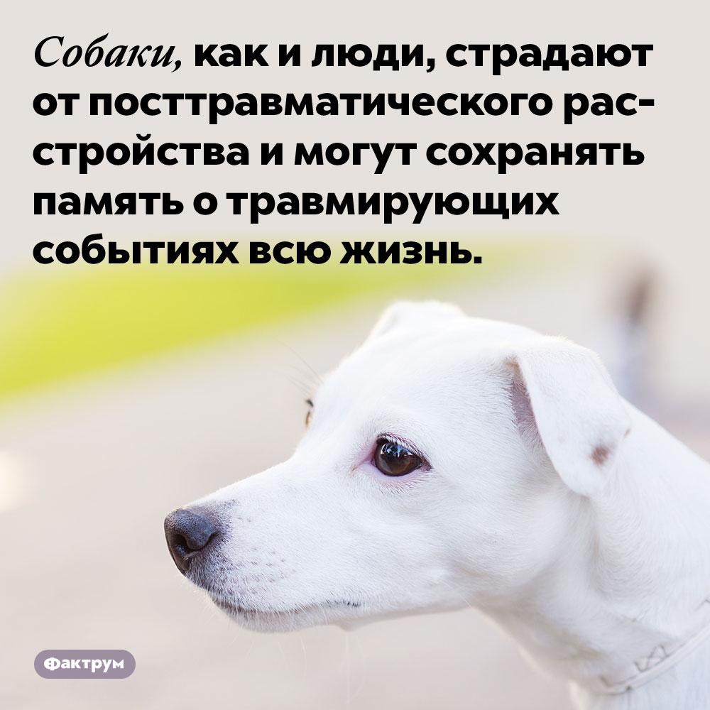 Собаки, как и люди, страдают от посттравматического расстройства и могут сохранять память о травмирующих событиях всю жизнь.