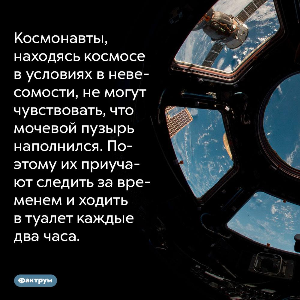 Космонавты, находясь космосе в условиях в невесомости, не могут чувствовать, что мочевой пузырь наполнился. Поэтому их приучают следить за временем и ходить в туалет каждые два часа.