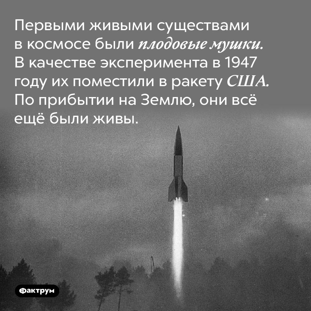 Первыми живыми существами в космосе были плодовые мушки. В качестве эксперимента в 1947 году их поместили в ракету США. По прибытии на Землю, они всё ещё были живы.