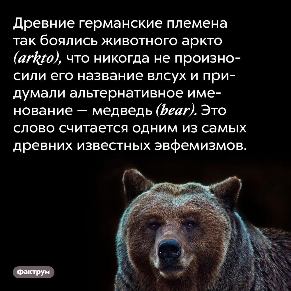 Древние германские племена так боялись животного аркто (arkto), что никогда не произносили его название влсух и придумали альтернативное именование — медведь (bear). Это слово считается одним из самых древних известных эвфемизмов.