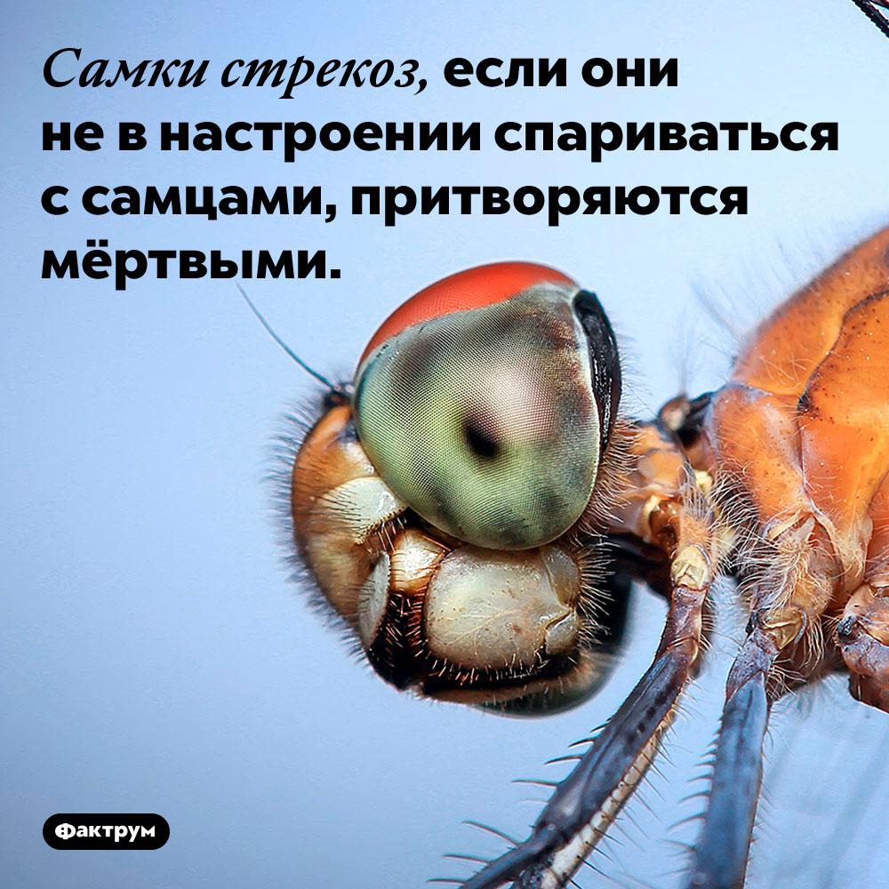 Самки стрекоз, если они не в настроении спариваться с самцами, притворяются мёртвыми.