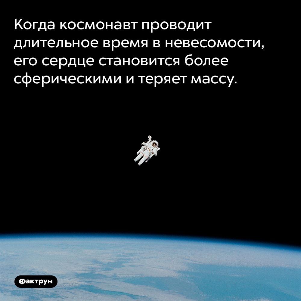 Когда космонавт проводит длительное время в невесомости, его сердце становится более сферическими и теряет массу.