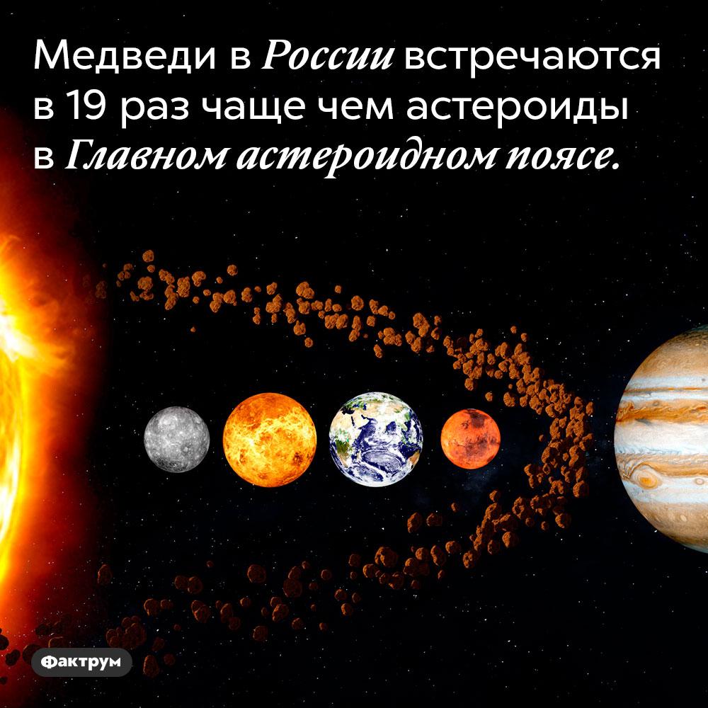 Медведи в России встречаются в 19 раз чаще чем астероиды в Главном астероидном поясе.