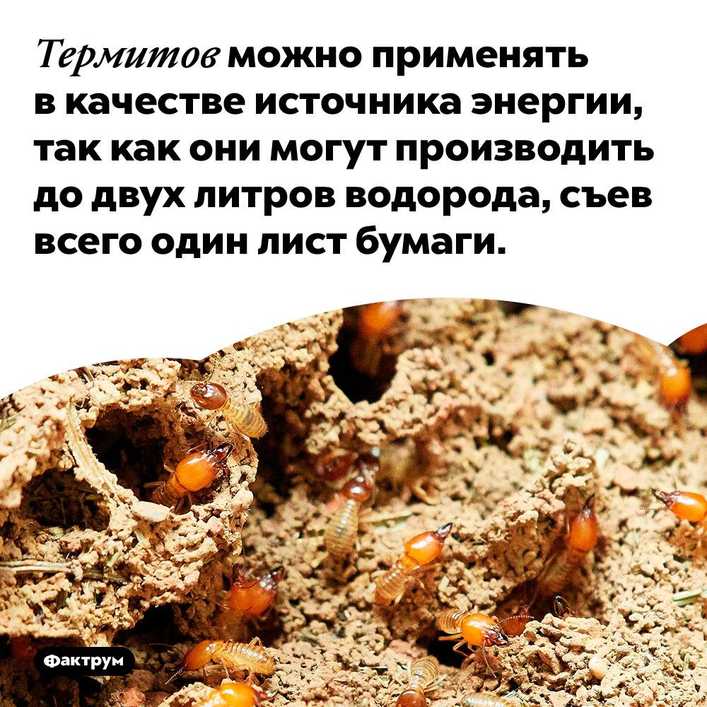Термиты как источник энергии. Термитов можно применять в качестве источника энергии, так как они могут производить до двух литров водорода, съев всего один лист бумаги