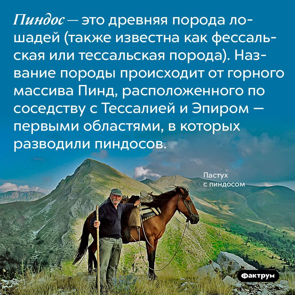 Пиндос — это древняя порода лошадей (также известна как фессальская или тессальская порода). Название породы происходит от горного массива Пинд, расположенного по соседству с Тессалией и Эпиром — первыми областями, в которых разводили пиндосов.