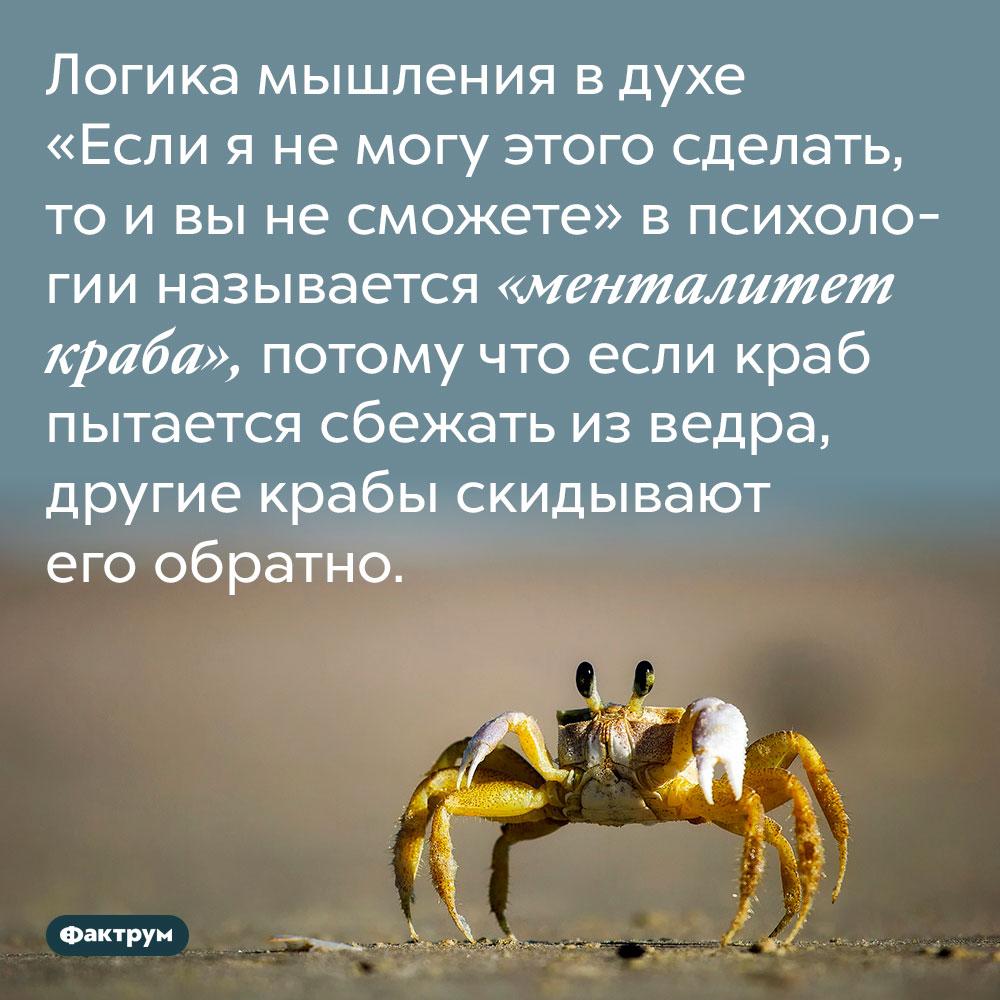 Логика мышления в духе «Если я не могу этого сделать, то и вы не сможете» в психологии называется «менталитет краба». Потому что если краб пытается сбежать из ведра, другие крабы скидывают его обратно.