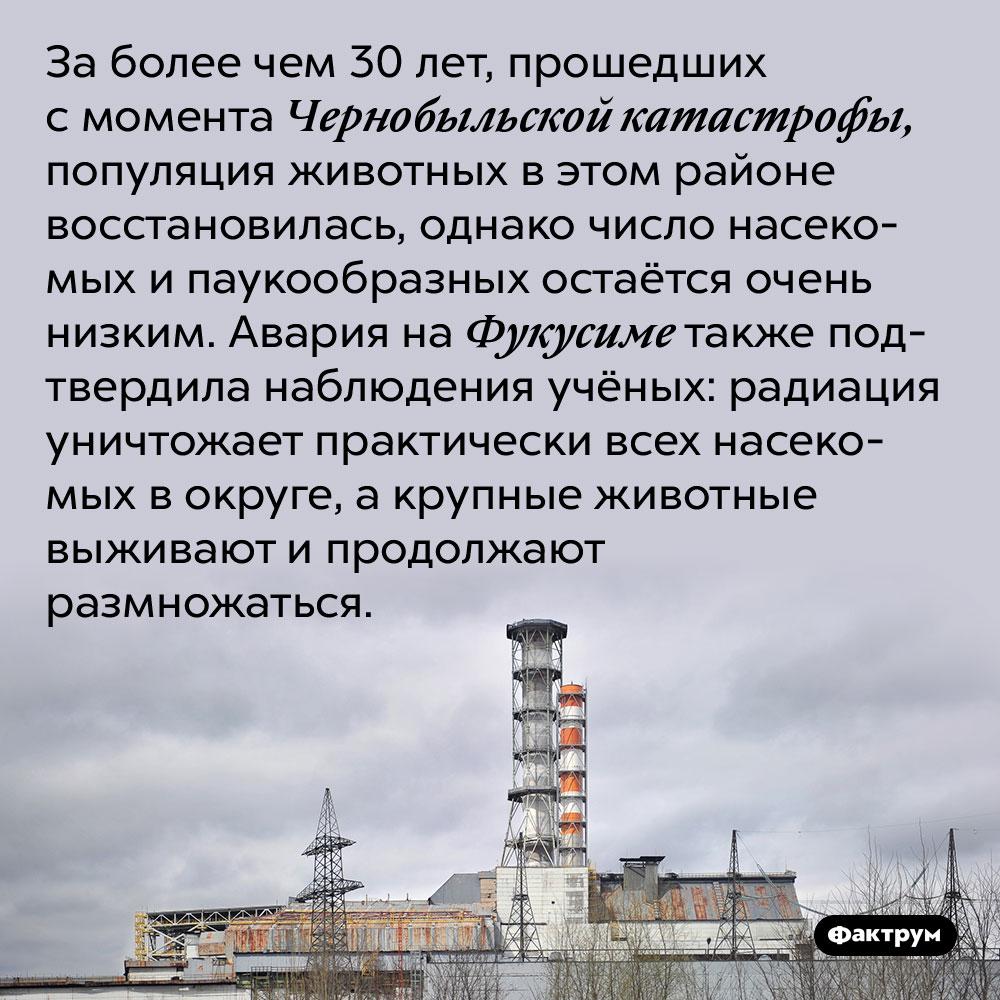 За более чем 30 лет, прошедших с момента Чернобыльской катастрофы, популяция животных в этом районе восстановилась, однако число насекомых и паукообразных остаётся очень низким. Авария на Фукусиме также подтвердила наблюдения учёных: радиация уничтожает практически всех насекомых в округе, а крупные животные выживают и продолжают размножаться.