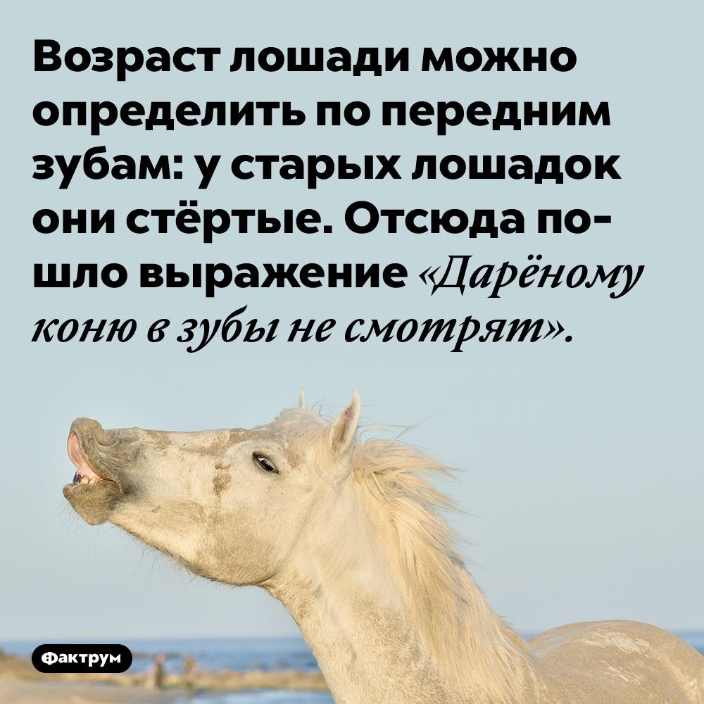 Возраст лошади можно определить по передним зубам: у старых лошадок они стёртые. Отсюда пошло выражение «Дарёному коню в зубы не смотрят».