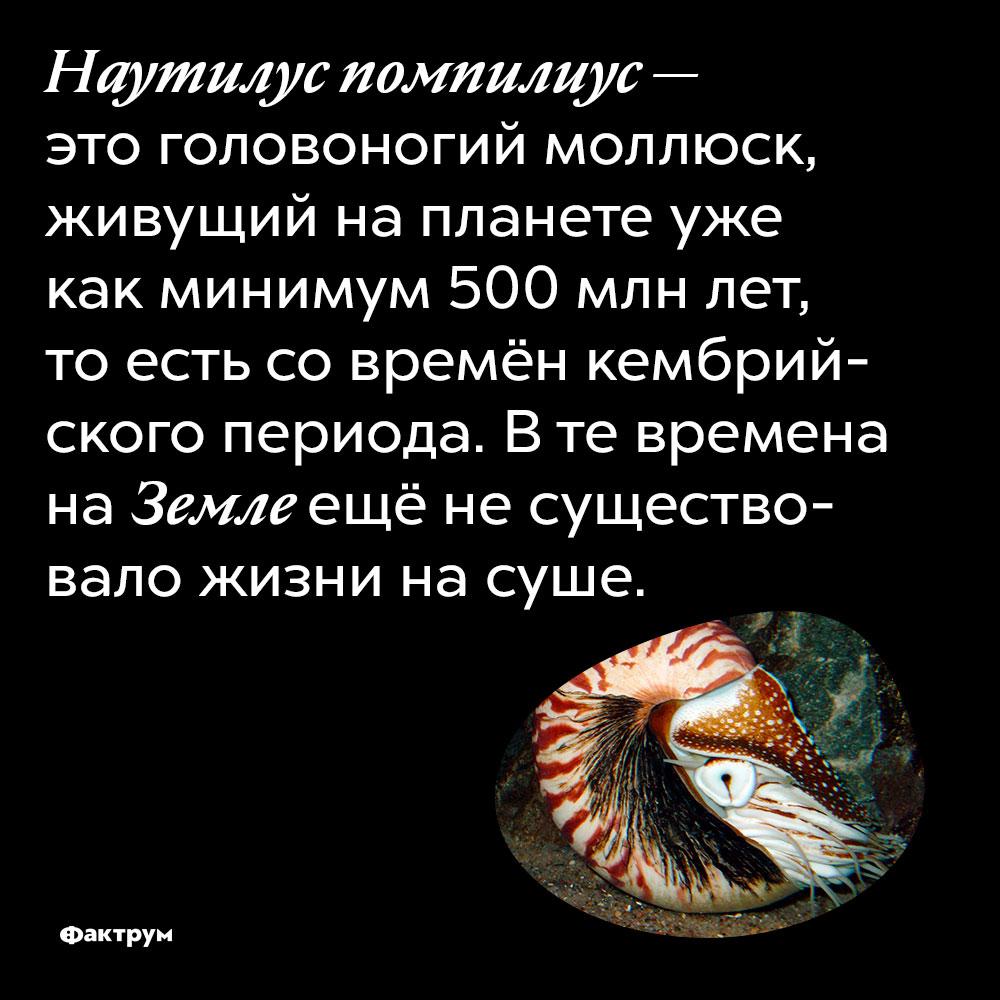 Наутилус помпилиус — это головоногий моллюск, живущий на планете уже как минимум 500 000 000 лет, то есть со времён кембрийского периода. В те времена на Земле ещё не существовало жизни на суше.