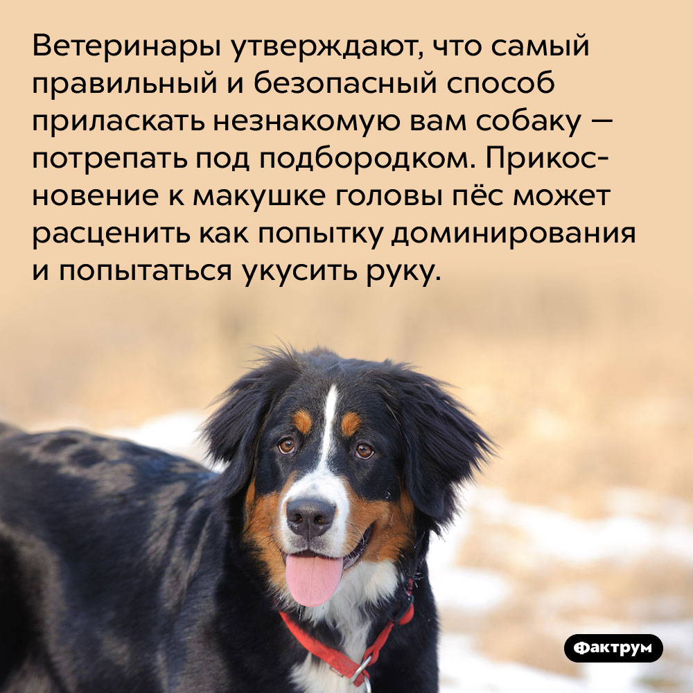 Ветеринары утверждают, что самый безопасный способ приласкать незнакомую вам собаку — потрепать под подбородком. Прикосновение к макушке головы пёс может расценить как попытку доминирования и попытаться укусить руку.