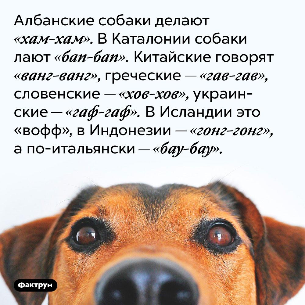 Албанские собаки делают «хам-хам». В Каталонии собаки лают «бап-бап». Китайские говорят «ванг-ванг», греческие — «гав-гав», словенские — «хов-хов», украинские — «гаф-гаф». В Исландии это «вофф», в Индонезии — «гонг-гонг», а по-итальянски — «бау-бау».