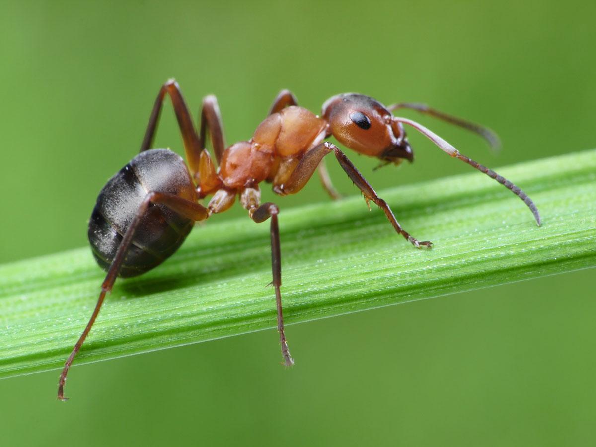 Зачем муравьи бегают покругу, пока неумрут?