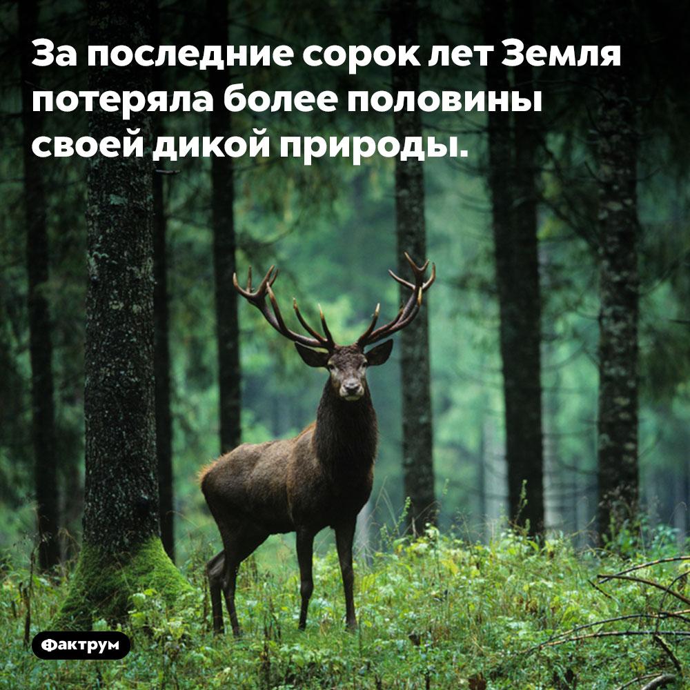 За последние сорок лет Земля потеряла более половины своей дикой природы.