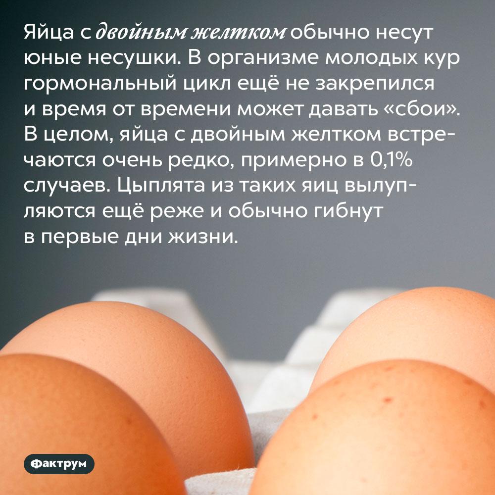 Яйца сдвойным желтком несут молодые куры. Яйца с двойным желтком обычно несут юные несушки. В организме молодых кур гормональный цикл ещё не закрепился и время от времени может давать «сбои». В целом, яйца с двойным желтком встречаются очень редко, примерно в 0,1% случаев. Цыплята из таких яиц вылупляются ещё реже и обычно гибнут в первые дни жизни.