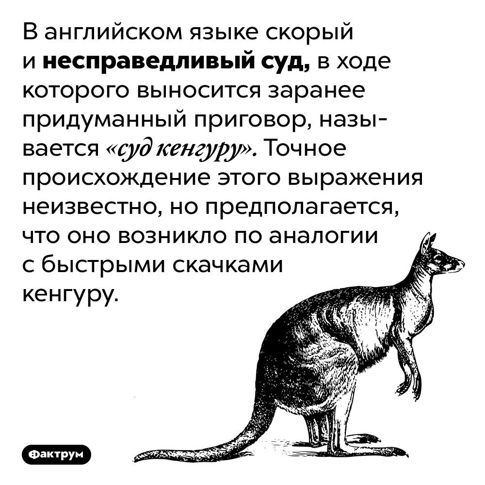 «Суд кенгуру» — это несправедливый суд сзаранее придуманным приговором. В английском языке скорый и несправедливый суд, в ходе которого выносится заранее придуманный приговор, называется «суд кенгуру». Точное происхождение этого выражения неизвестно, но предполагается, что оно возникло по аналогии с быстрыми скачками кенгуру.