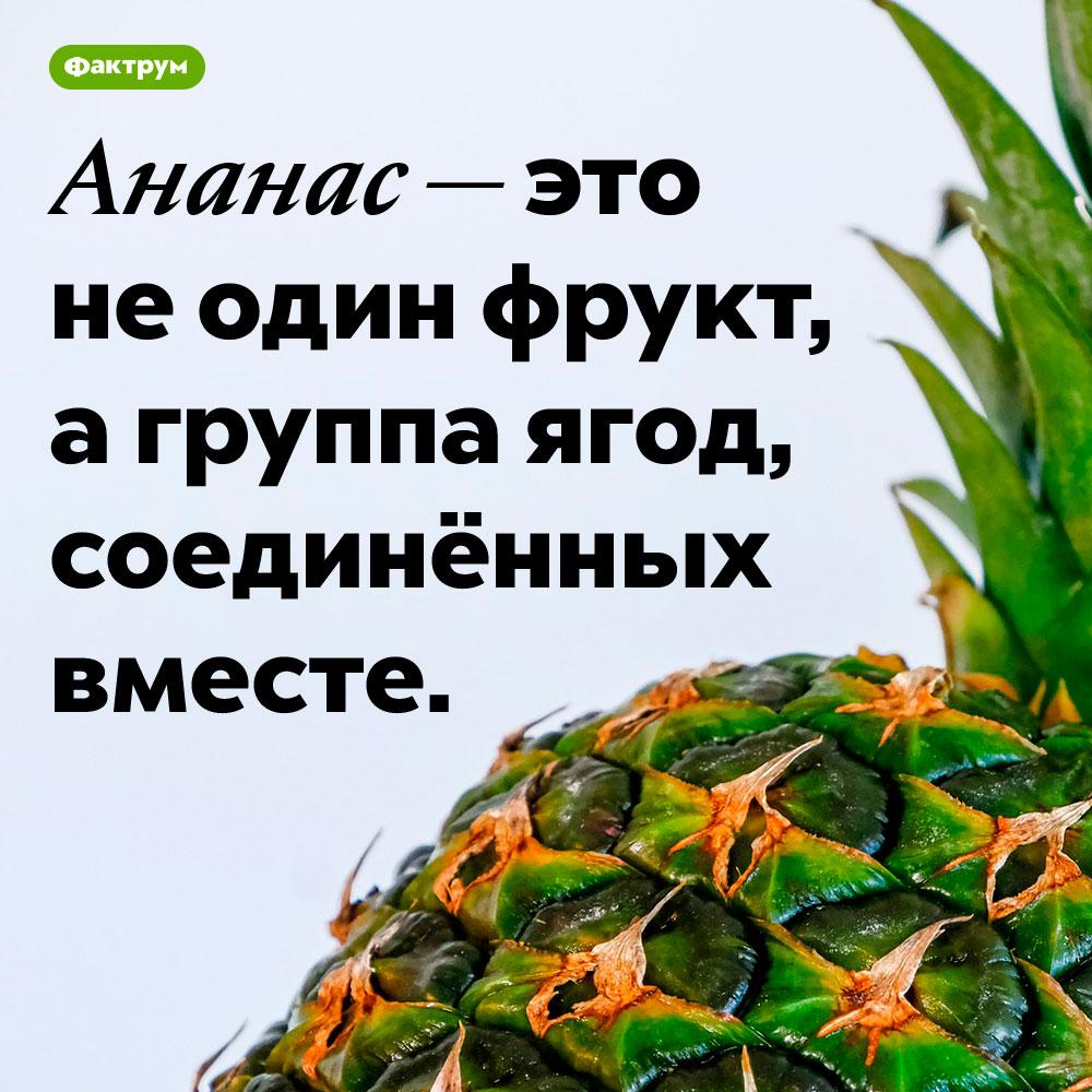 Ананас — это группа соединённых ягод. Ананас — это не один фрукт, а группа ягод, соединённых между собой.