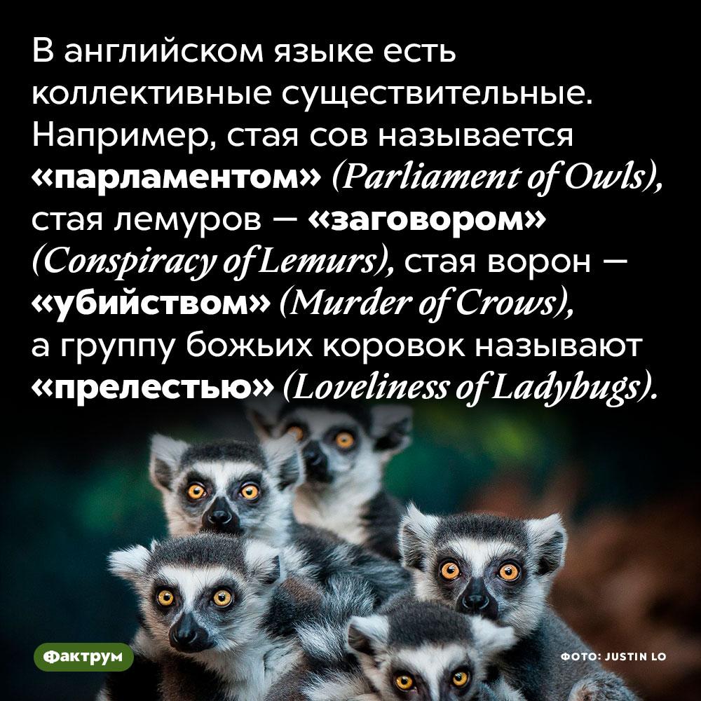 В английском языке есть специальные существительные для обозначения групп животных. В английском языке есть коллективные существительные. Например, стая сов называется «парламентом» (Parliament of Owls), стая лемуров — «заговором» (Conspiracy of Lemurs), стая ворон — «убийством» (Murder of Crows), а группу божьих коровок называют «прелестью» (Loveliness of Ladybugs).