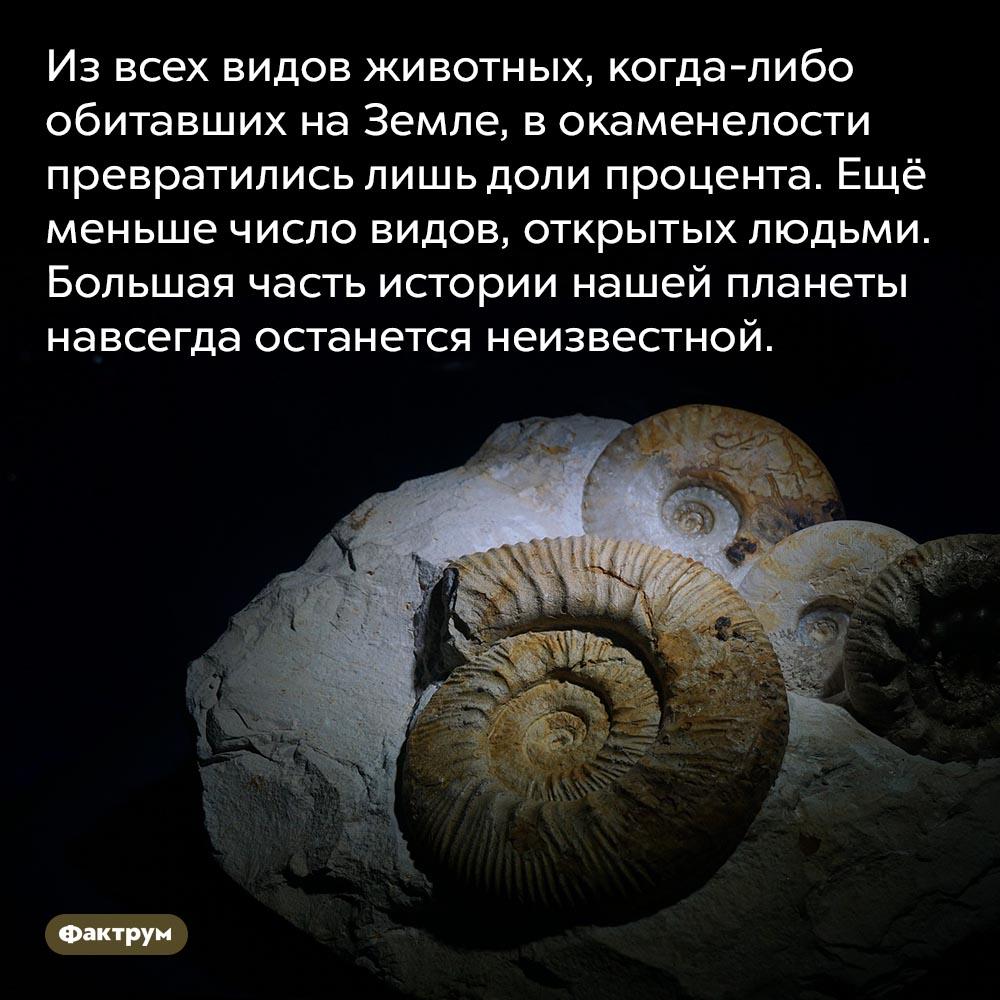 Сколько видов животных открыл человек. Из всех видов животных, когда-либо обитавших на Земле, в окаменелости превратились лишь доли процента. Ещё меньше число видов, открытых людьми. Большая часть истории нашей планеты навсегда останется неизвестной.
