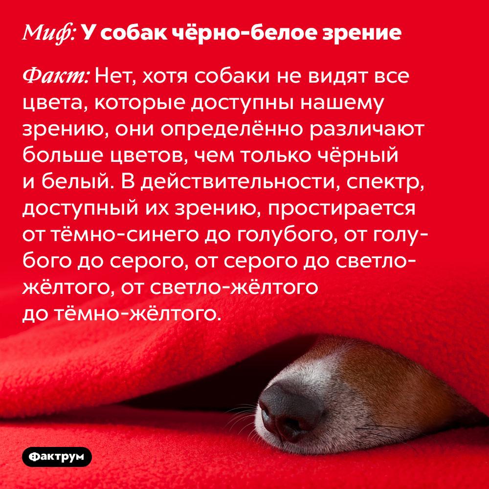 Усобак нечёрно-белое зрение. Хотя собаки не видят все цвета, которые доступны нашему зрению, они определённо различают больше цветов, чем только чёрный и белый. В действительности, спектр, доступный их зрению, простирается от тёмно-синего до голубого, от голубого до серого, от серого до светло-жёлтого, от светло-жёлтого до тёмно-жёлтого.